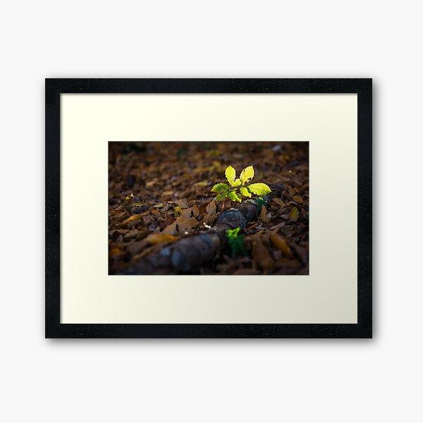 Small leaves in the light Framed Art Print