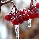 Ice storm by Missy