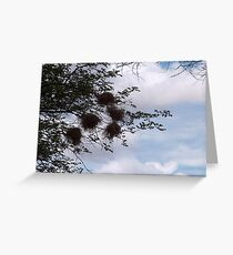 SOUTHERN MASKED WEAVER NESTS Greeting Card