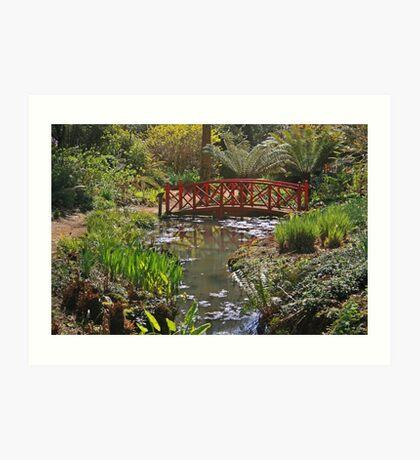 Subtropical Gardens, Abbotsbury Art Print