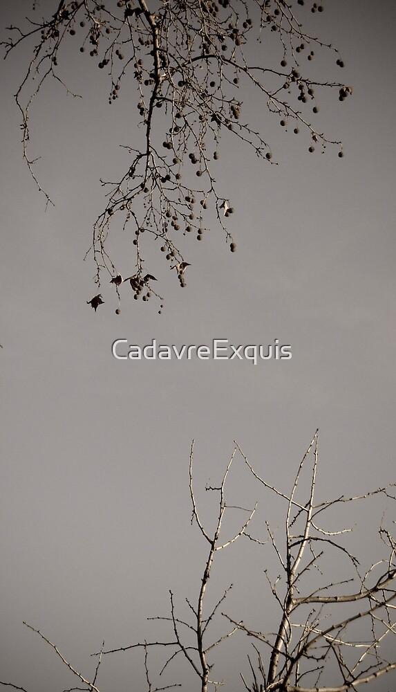 Árvores Dormentes by CadavreExquis