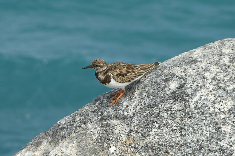 Sandpiper by kld73