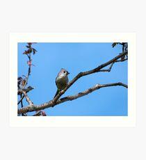 Titmouse Bird in Tree Art Print