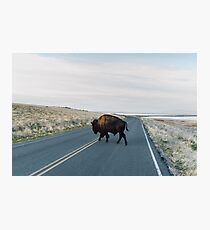 Seldom is Herd Photographic Print