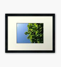 Lush Leafy Green Framed Print