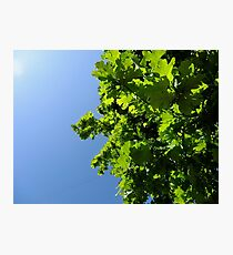 Lush Leafy Green Photographic Print