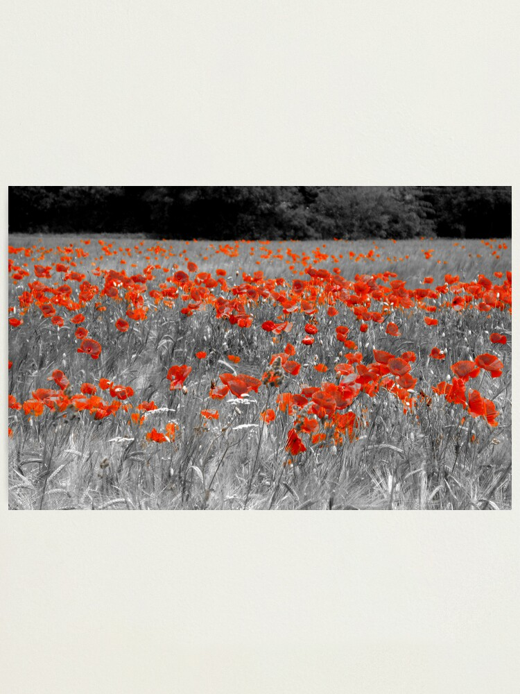 Alternate view of Mono Poppies Photographic Print
