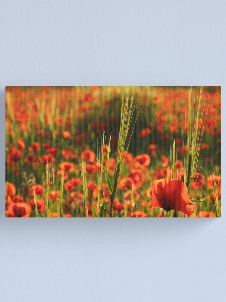 Alternate view of Poppies2 Canvas Print