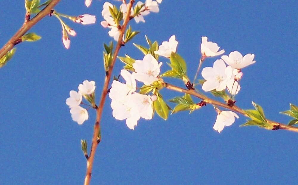 Oh! Spring~ by reisalin