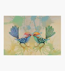 little love birds blue Photographic Print