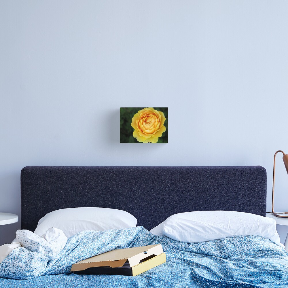 Apricot Rose Canvas Print