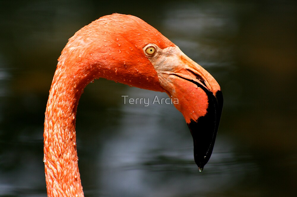 In the pink by Terry Arcia