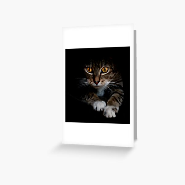 Out of the Shadows Greeting Card