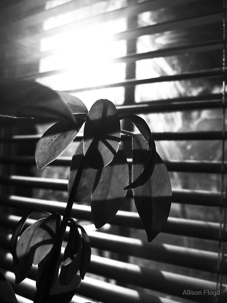 House Plant by Allison Floyd