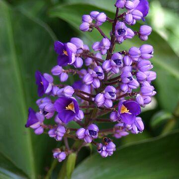 Blue Ginger Tropical Wonder by kaety