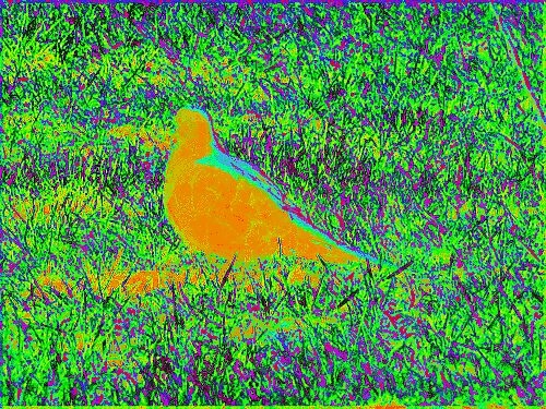 Glow of a Bird by paulwhiteuvme