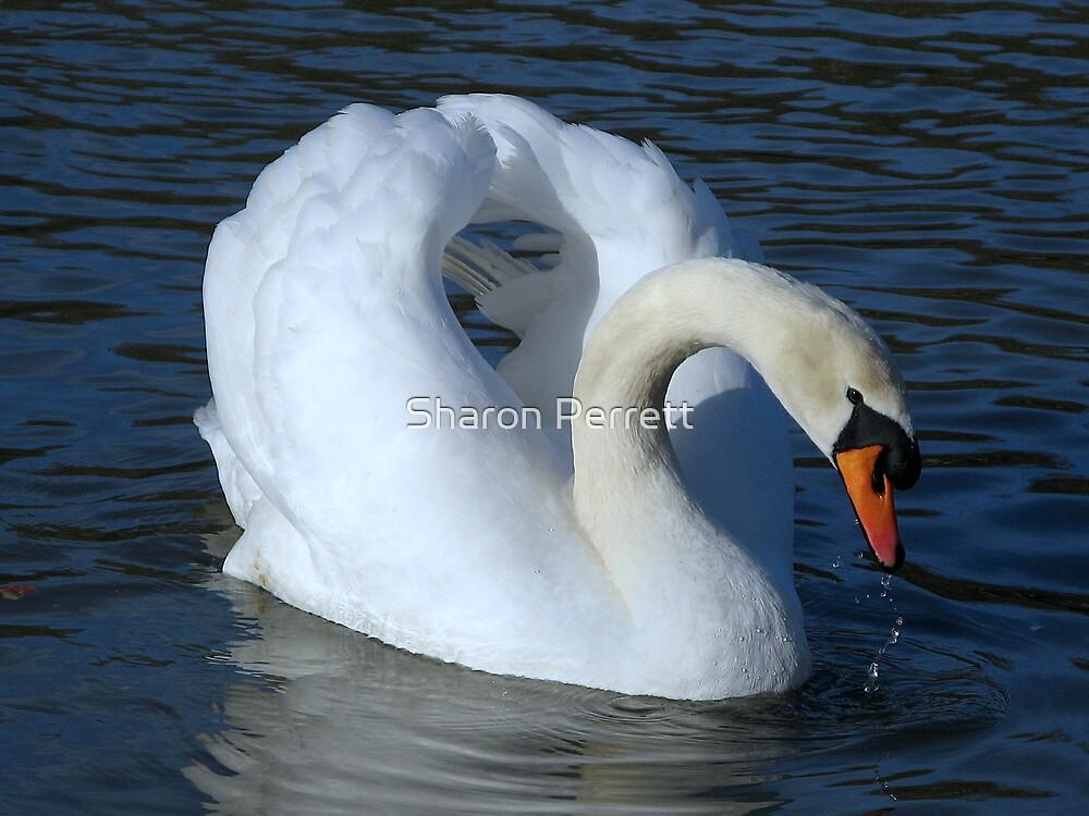 Swan Lake by Sharon Perrett