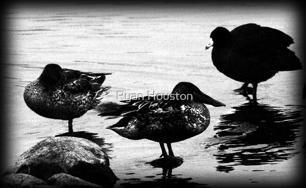 Shoveler Duck & Coot by Ryan Houston