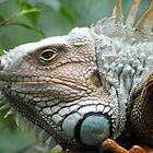 Close to the Iguana by Donna Wilkins