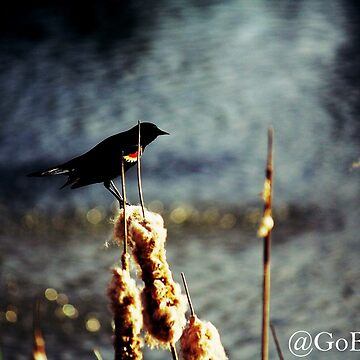 Bird on the Rushes by MrsScoops