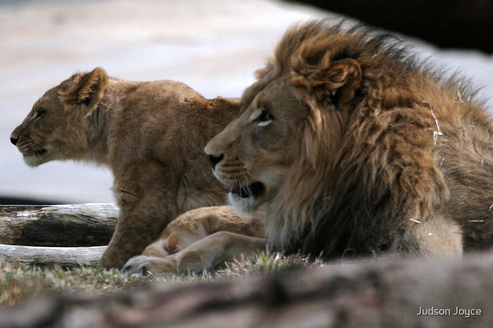 Lions by Judson Joyce