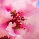 Frühlingsimpressionen von Celeste Mookherjee