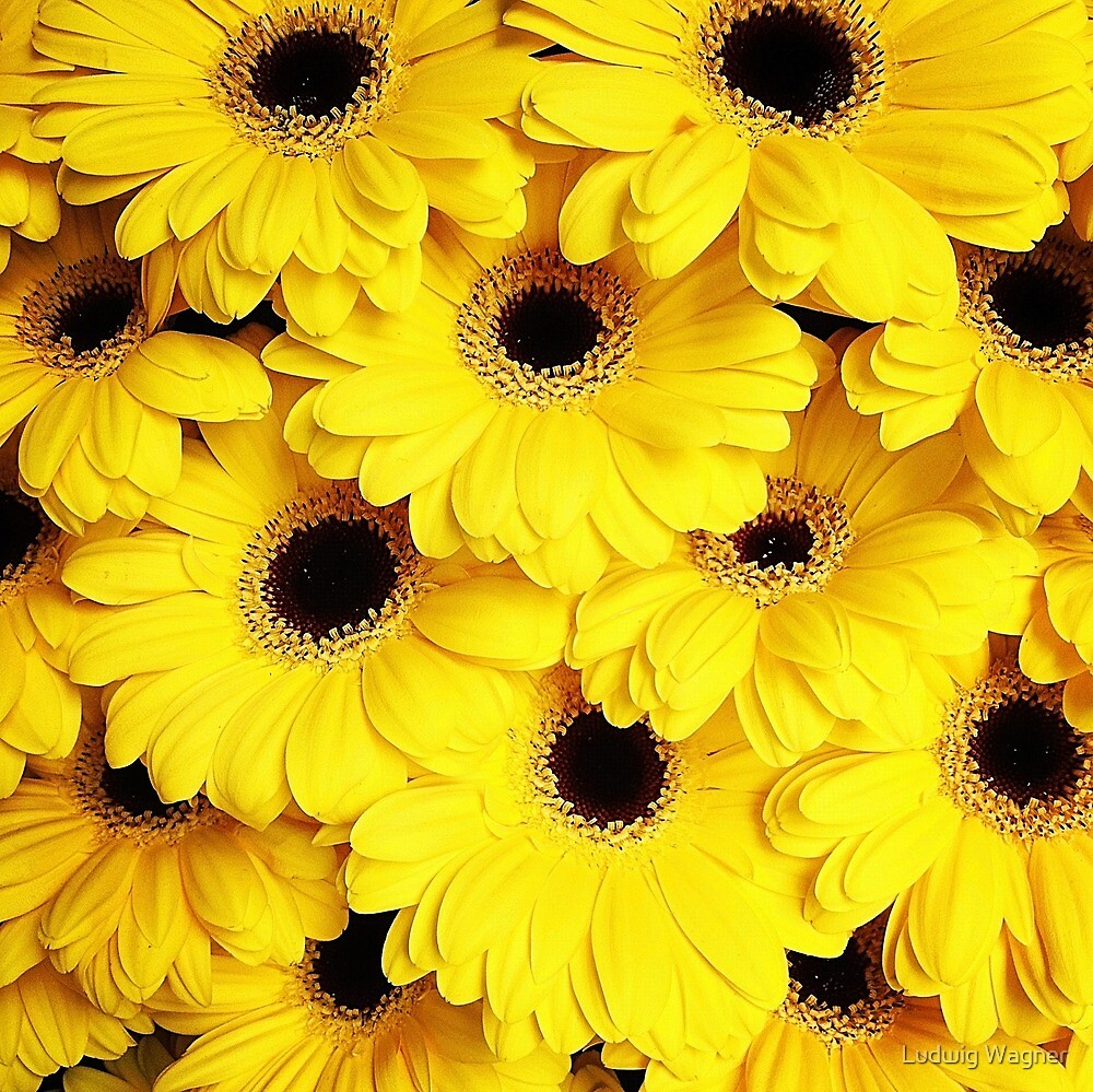 Yellow Daisies by Ludwig Wagner