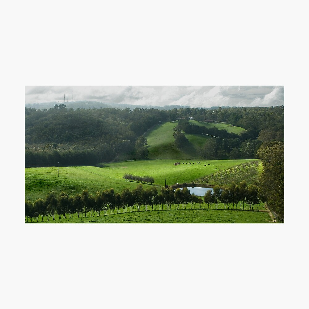 Adelaide Hill's in Green. Photographic Print