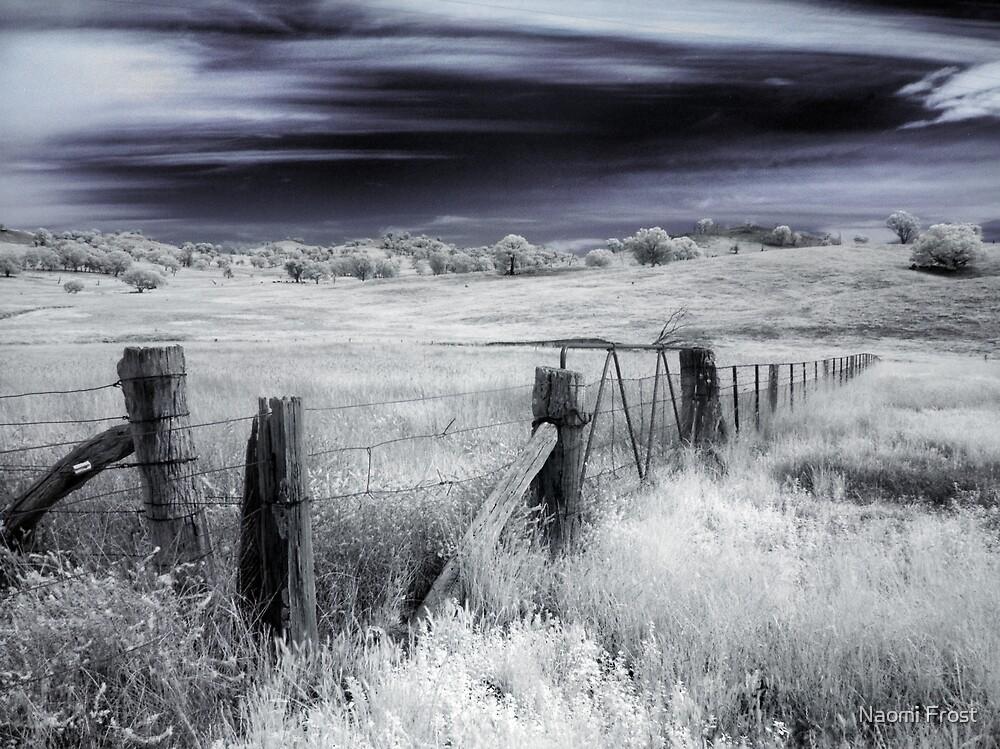 Forgotton Fields by Naomi Frost