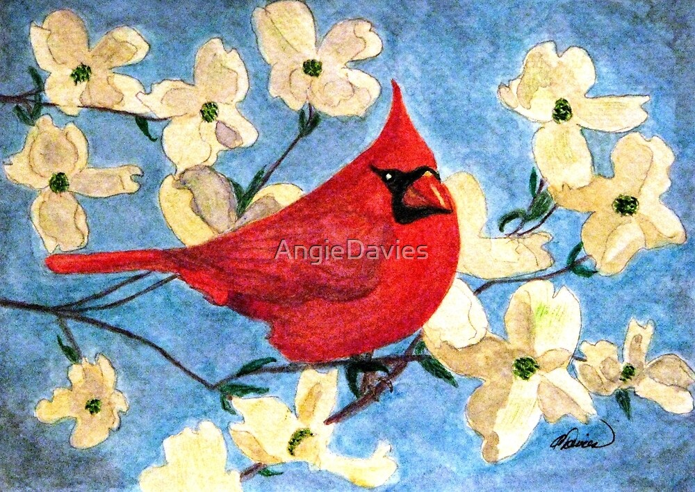 A Cardinal Spring by AngieDavies