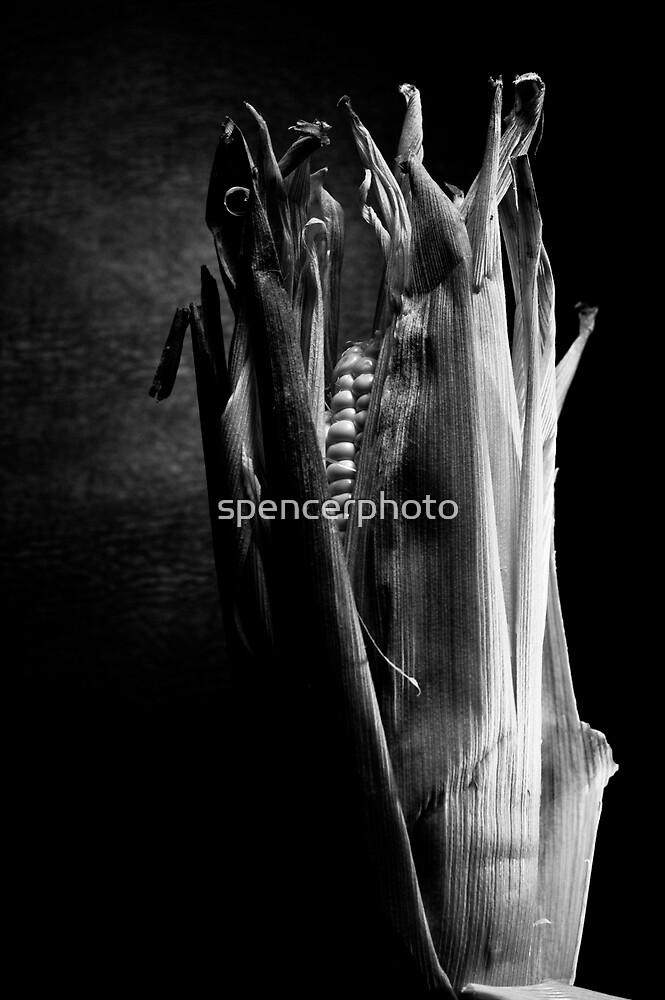 internet corn by spencerphoto