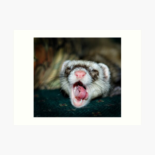 Love is a Ferret. Art Print