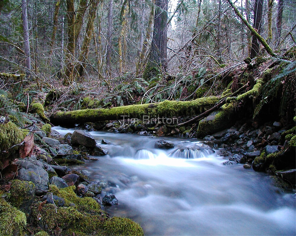 Bald Hornet Creek Dusk  by TimsWorld