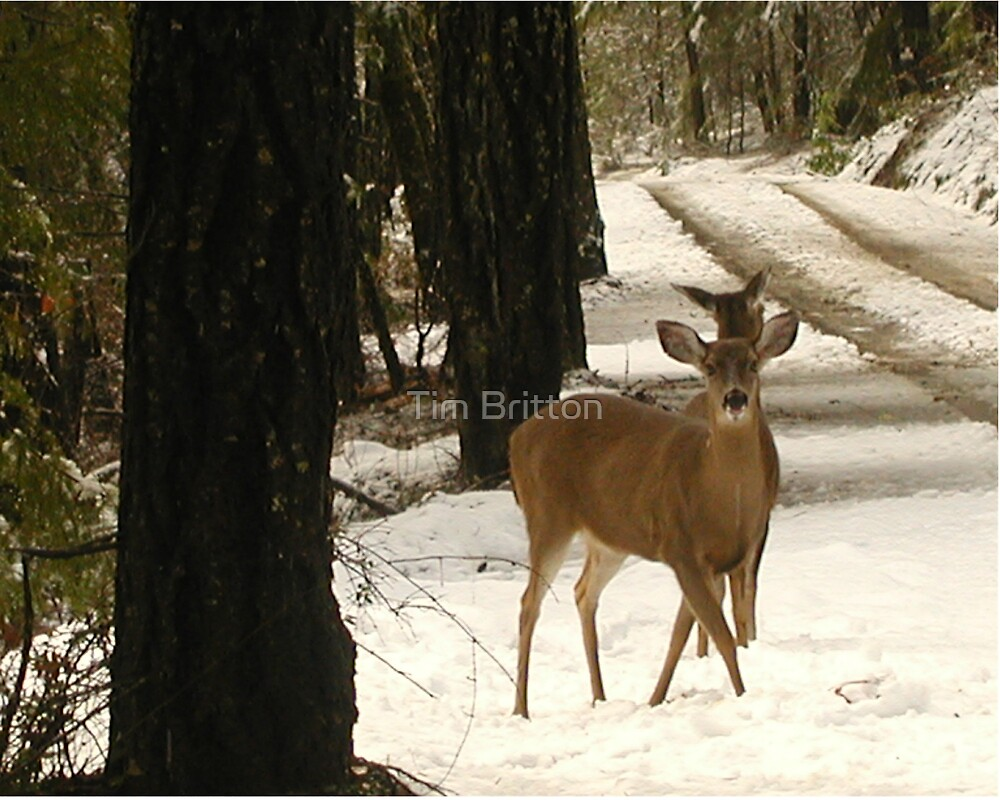 Deers snowday by TimsWorld