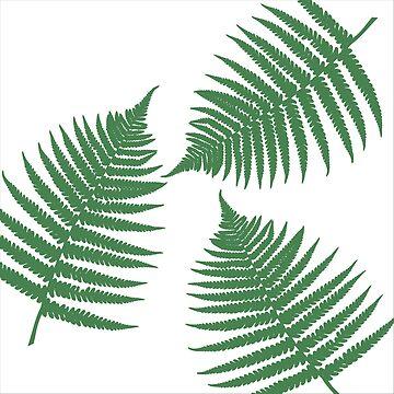 Fern Leaves by annumar