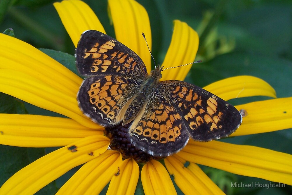 Butterfly by Michael Houghtalin