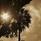 Summer in Florida by Amy  Young