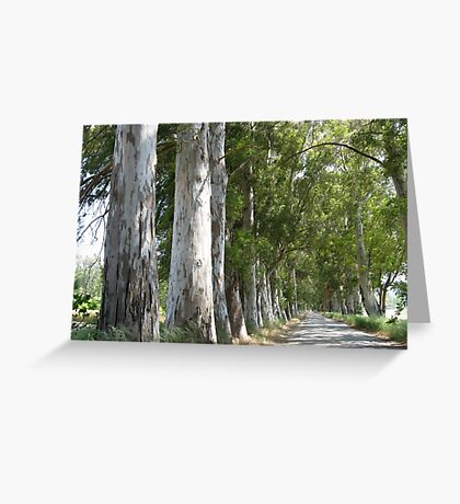 Old Mugla - Marmaris Road Eucalyptus Akcapinar Greeting Card
