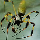 Itsy Bitsy Spider by Amy  Young