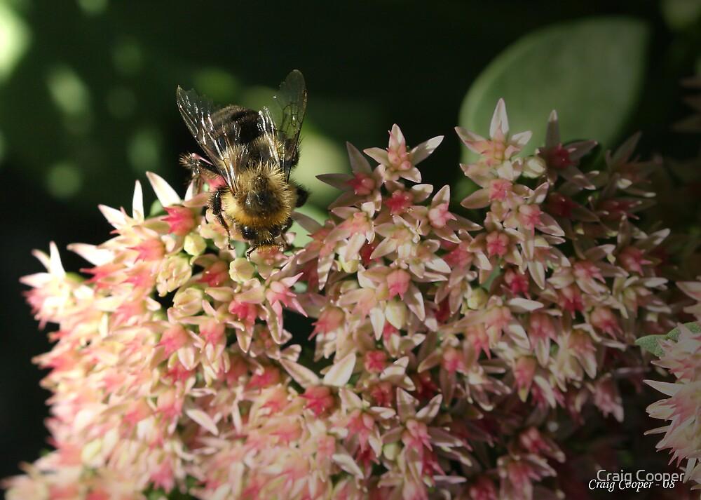 Autum Joy Bumble Bee by Craig Cooper
