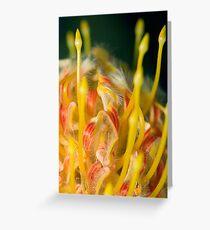 Proteaceae Leucospermum aka Pincushion 3 Greeting Card