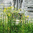 weeds by Lynne Prestebak