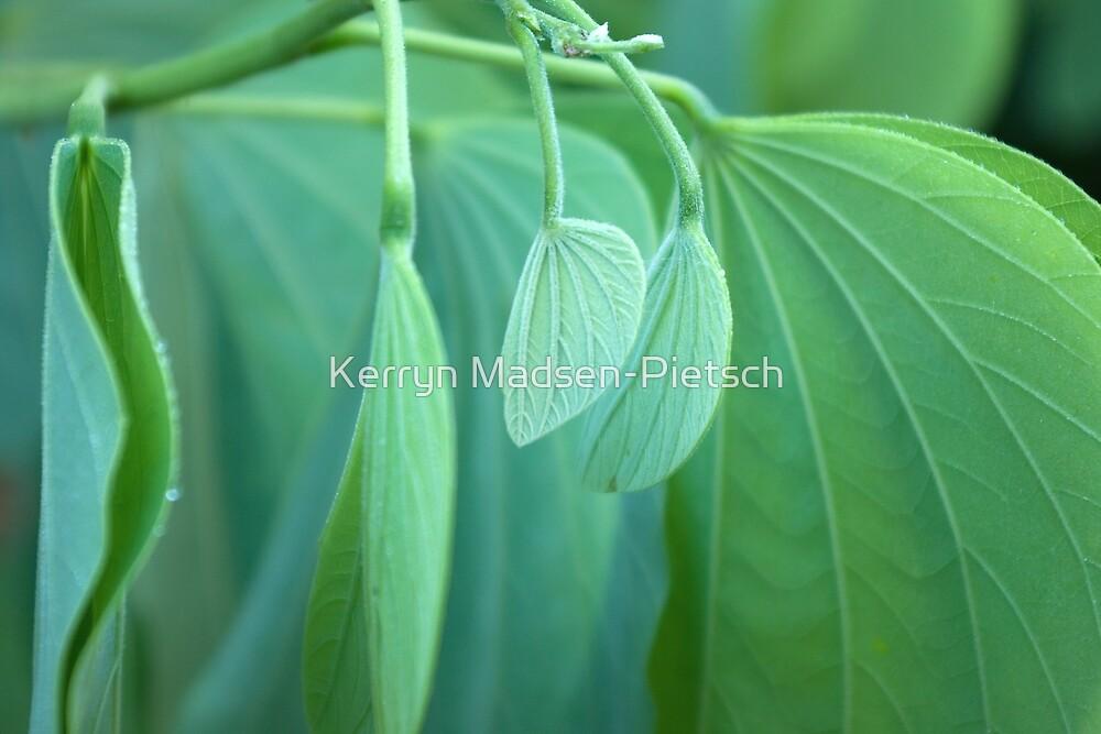 New Beginnings - Soft and Tender by Kerryn Madsen-Pietsch