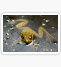 Green Frog in Water Sticker
