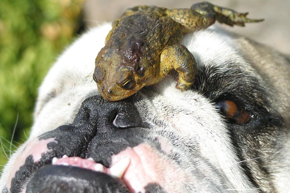 FROG On Bulldog by Beaner
