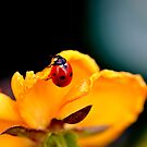 You`re Bugging Me! by Rosemary Sobiera