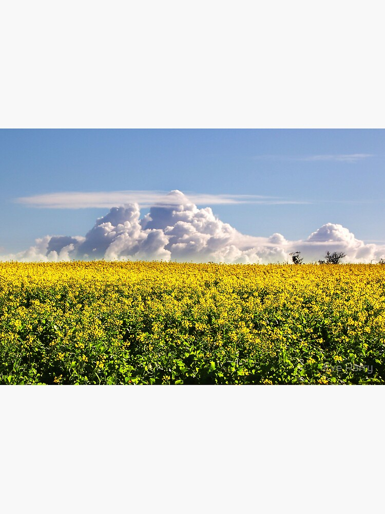 Canola Crops and Clouds by AdamsWife