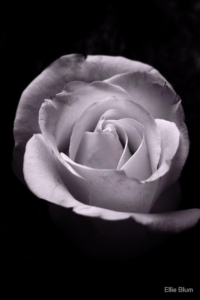 Dark Beauty by Ellie Blum