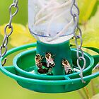 Honey bee feeder by missmoneypenny
