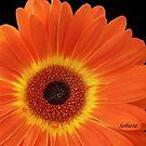 Or-an-ju beautiful! by Rosemary Sobiera